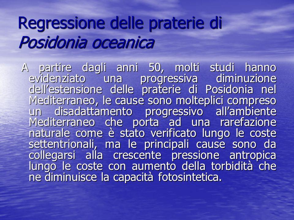Regressione delle praterie di Posidonia oceanica