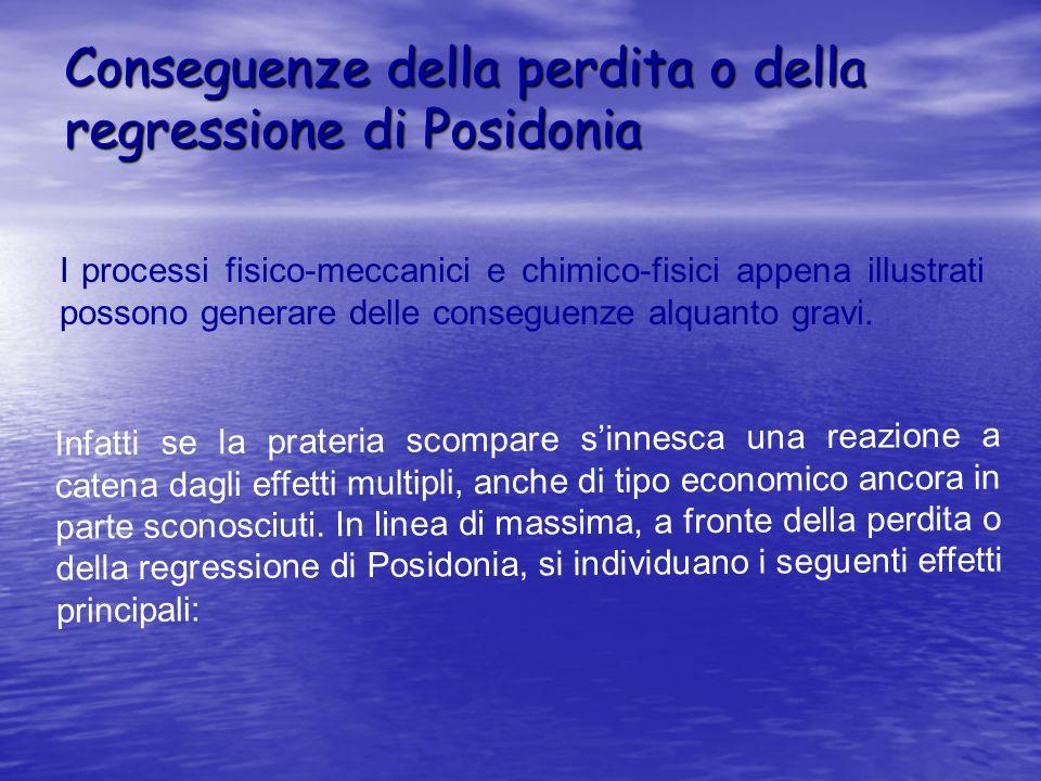Conseguenze della perdita o della regressione di Posidonia