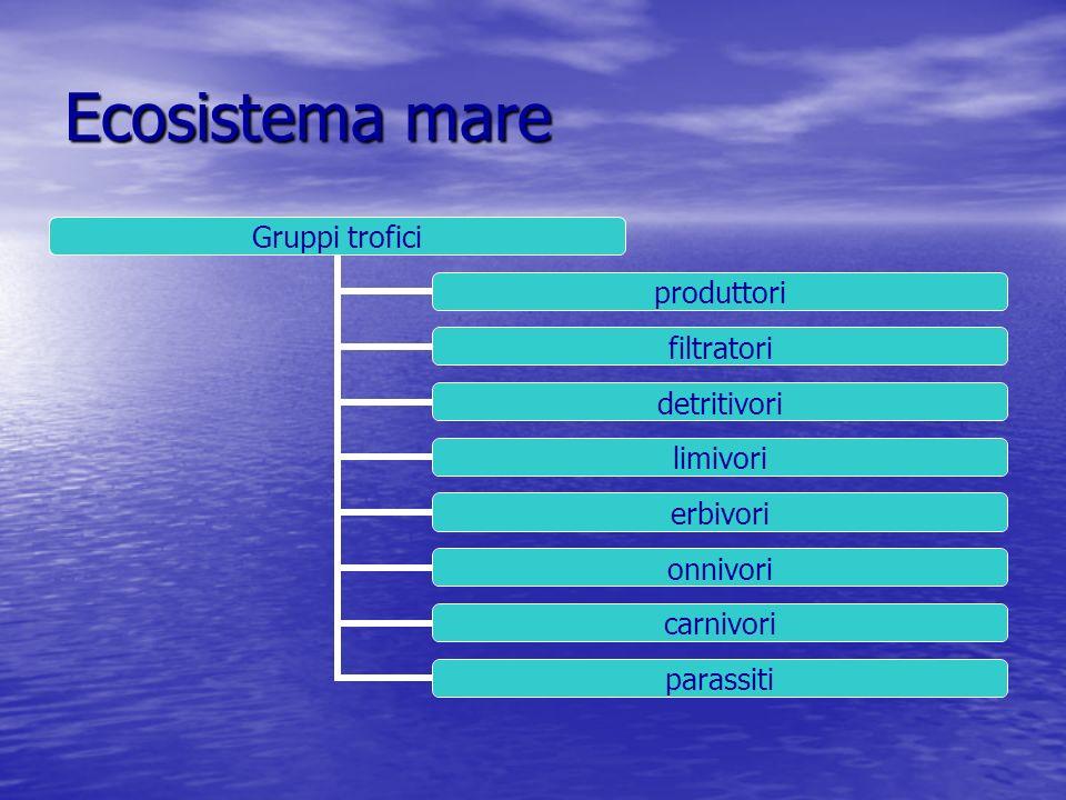 Ecosistema mare