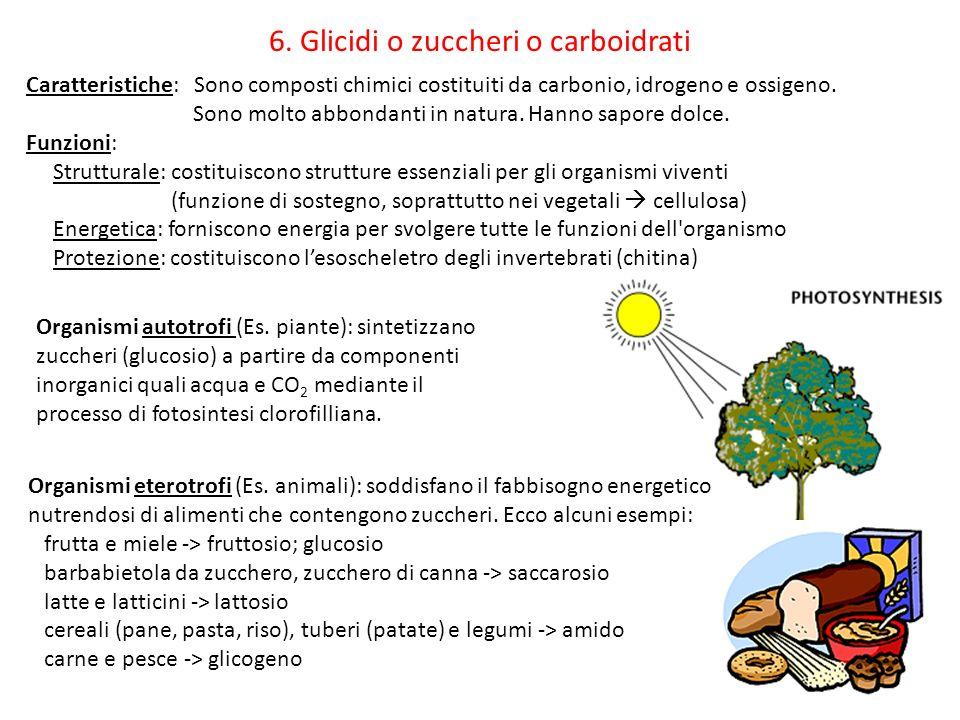 6. Glicidi o zuccheri o carboidrati