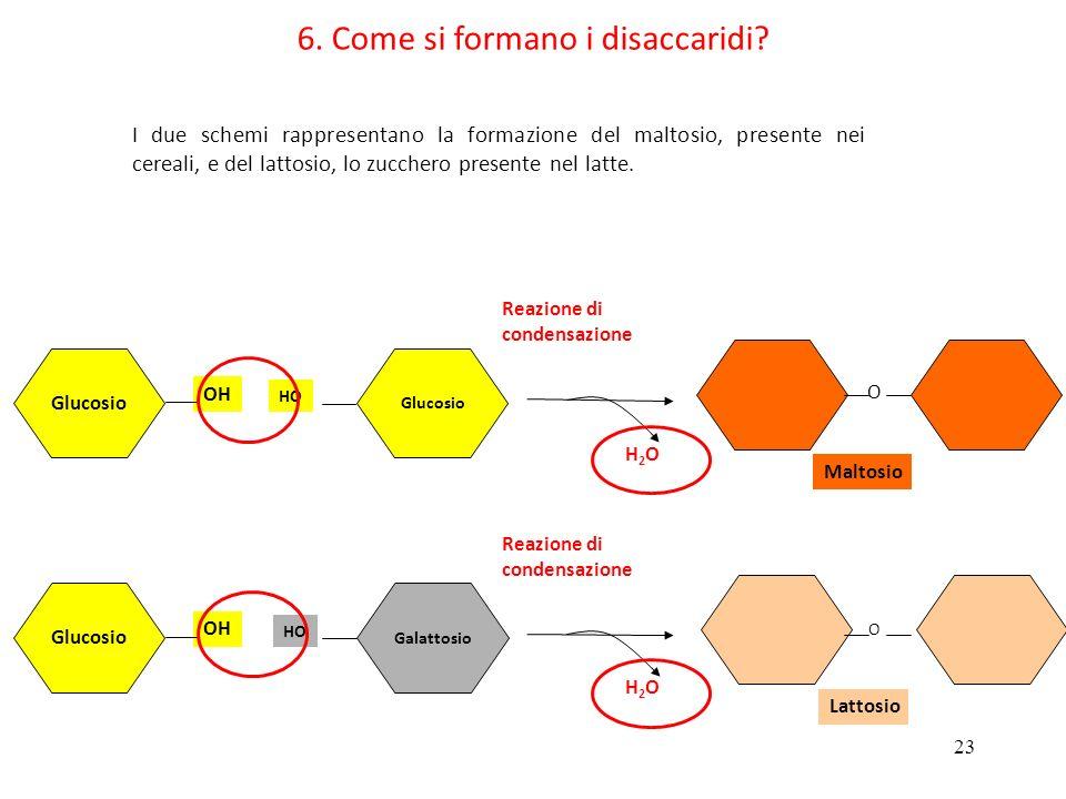 6. Come si formano i disaccaridi