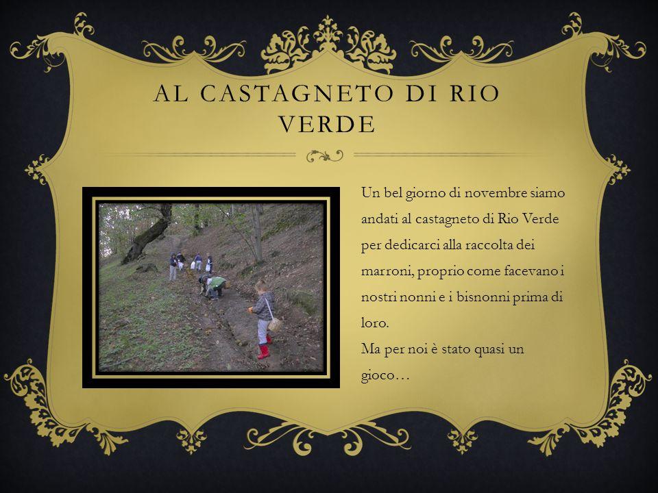 Al castagneto di Rio verde
