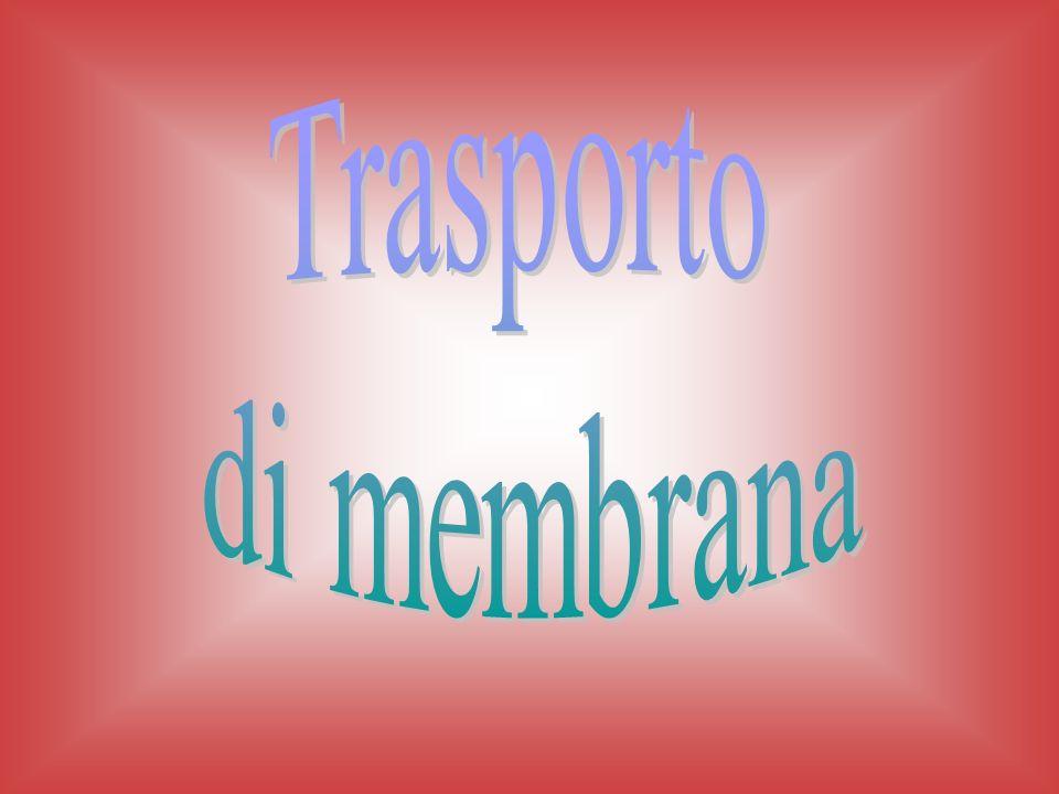 Trasporto di membrana