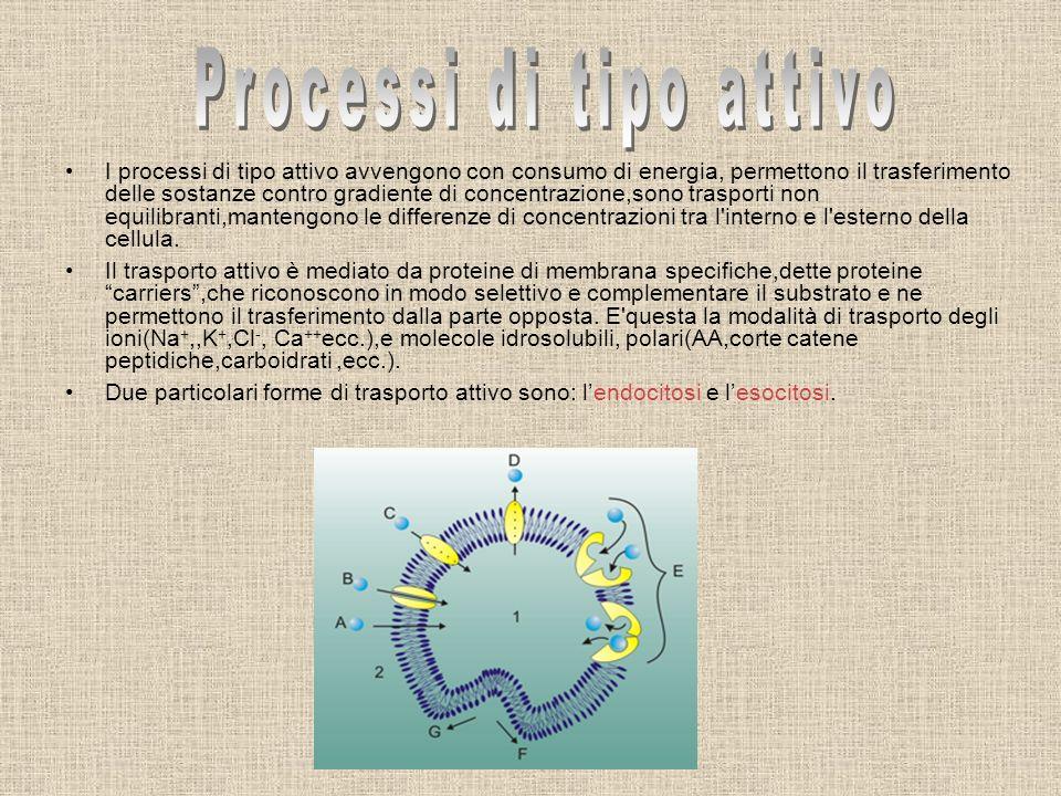 Processi di tipo attivo