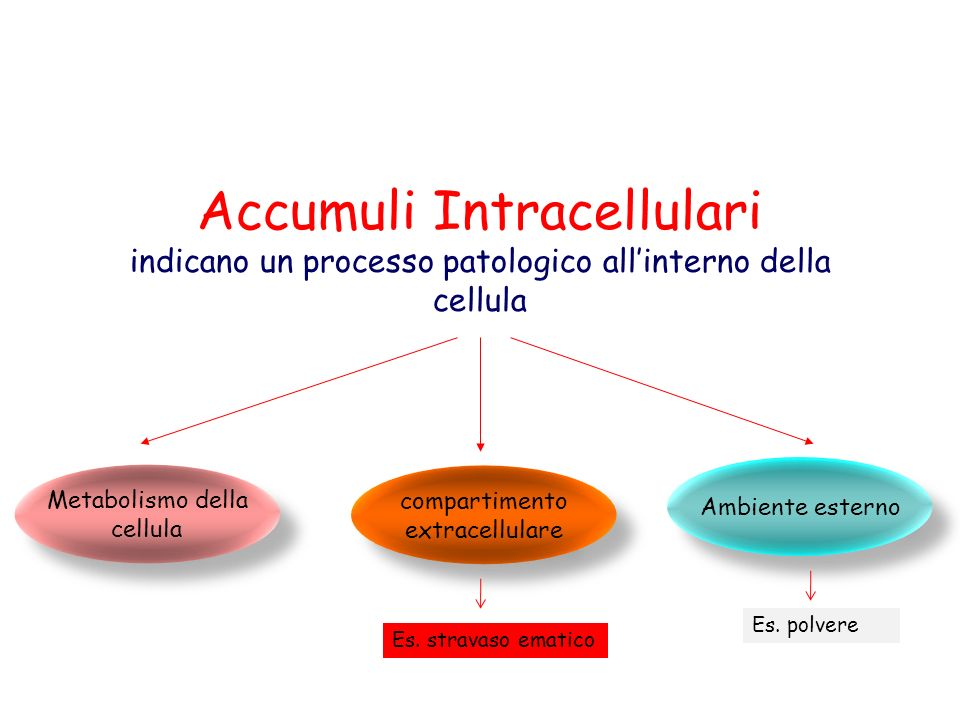 Accumuli Intracellulari indicano un processo patologico all'interno della cellula