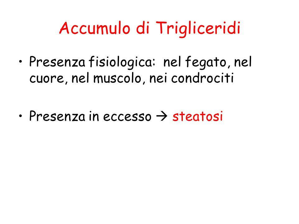 Accumulo di Trigliceridi
