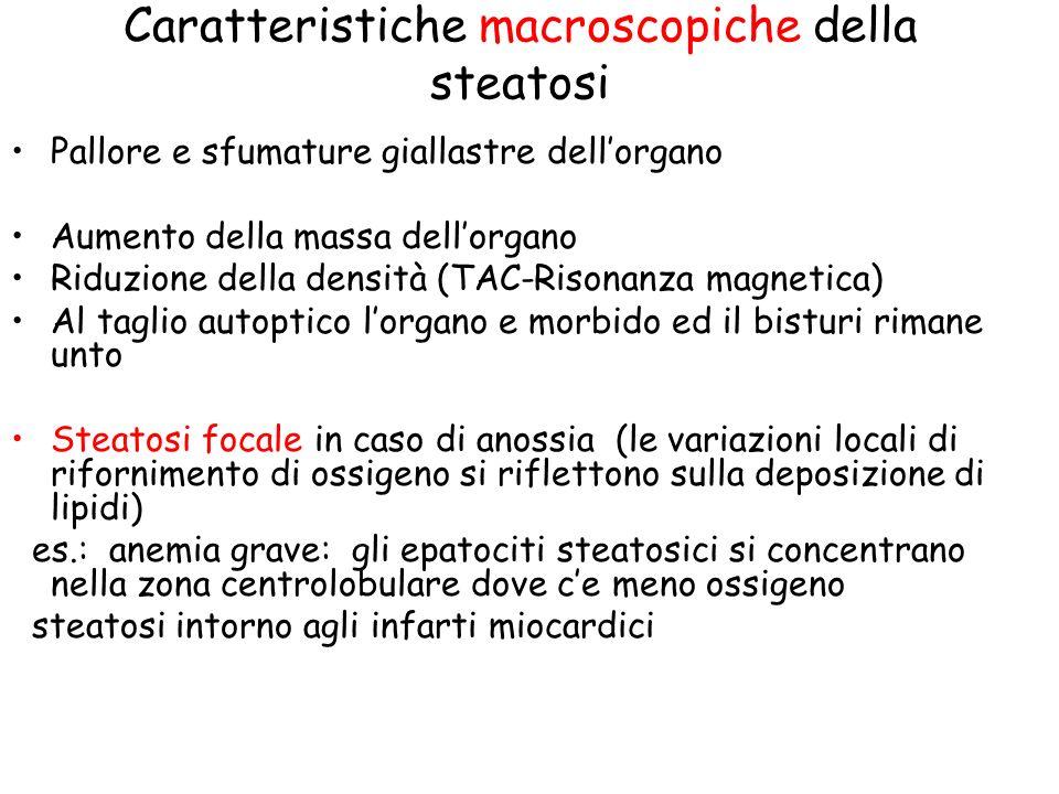 Caratteristiche macroscopiche della steatosi