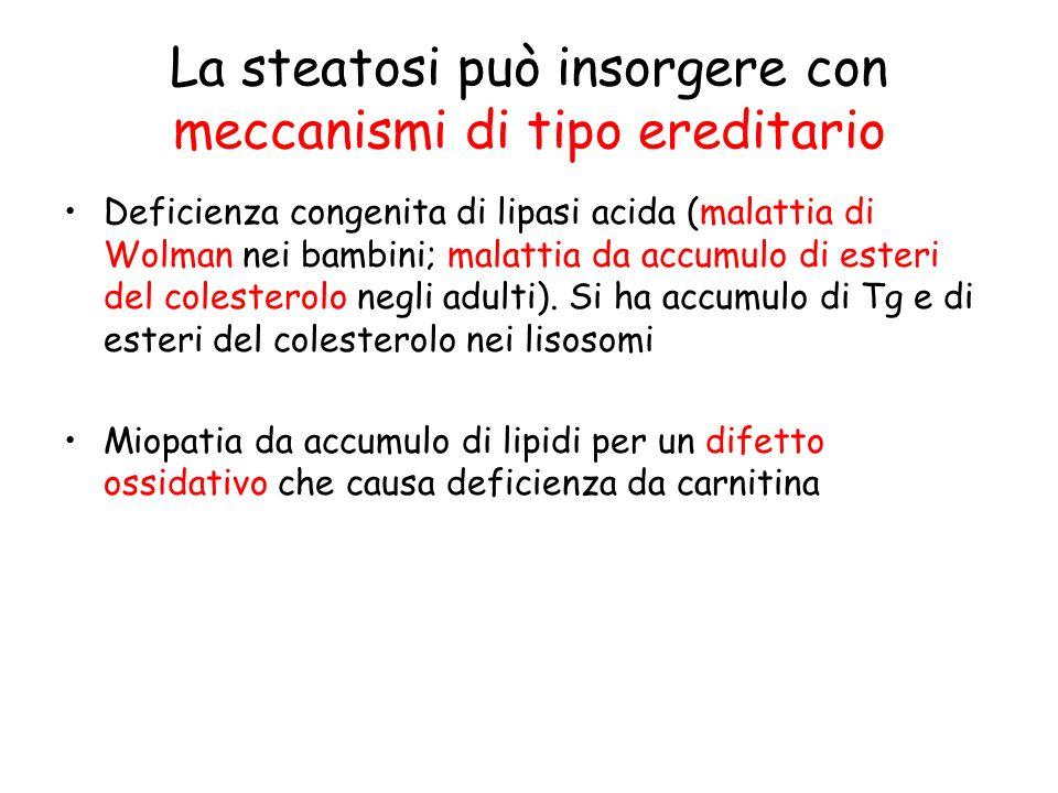La steatosi può insorgere con meccanismi di tipo ereditario