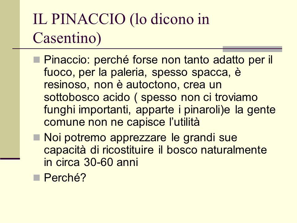 IL PINACCIO (lo dicono in Casentino)