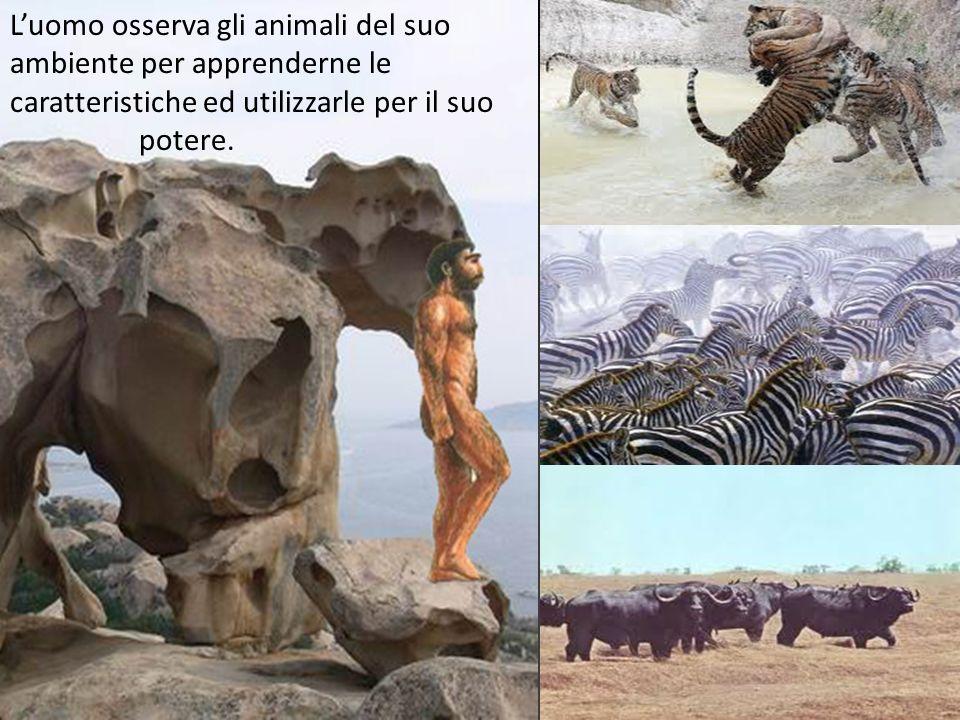 L'uomo osserva gli animali del suo ambiente per apprenderne le caratteristiche ed utilizzarle per il suo