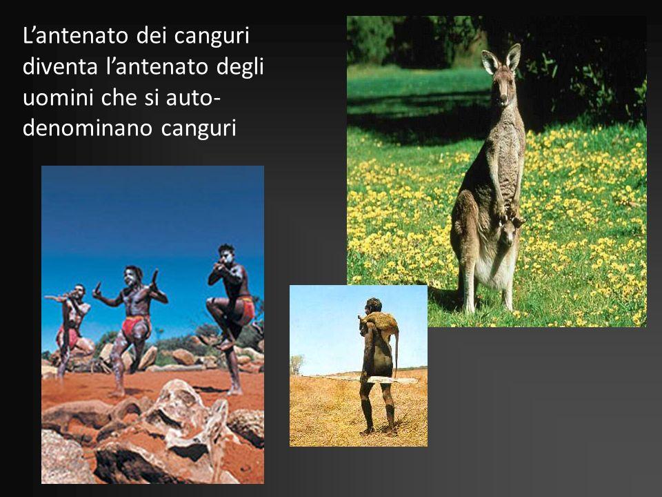 L'antenato dei canguri diventa l'antenato degli uomini che si auto-denominano canguri