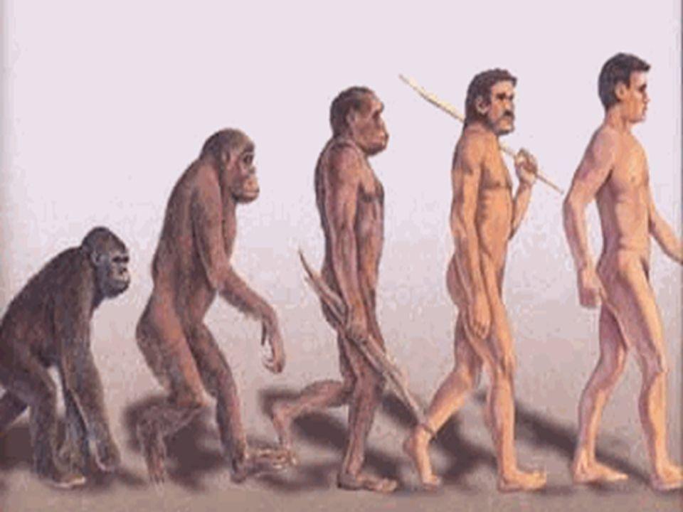 Attraverso secoli di evoluzione la nostra pelliccia si è trasformata in una sottile peluria