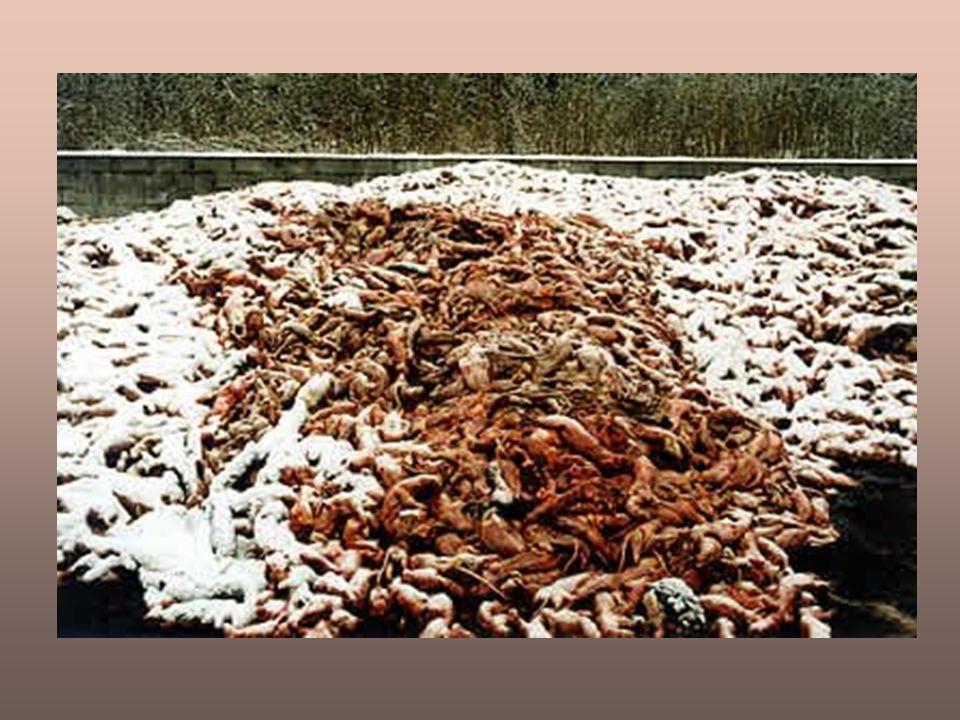 Scarti dell'industria della pellicceria: fosse ricolme di corpi nudi