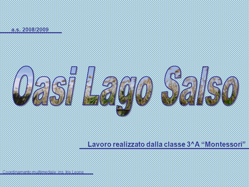 Oasi Lago Salso Lavoro realizzato dalla classe 3^A Montessori