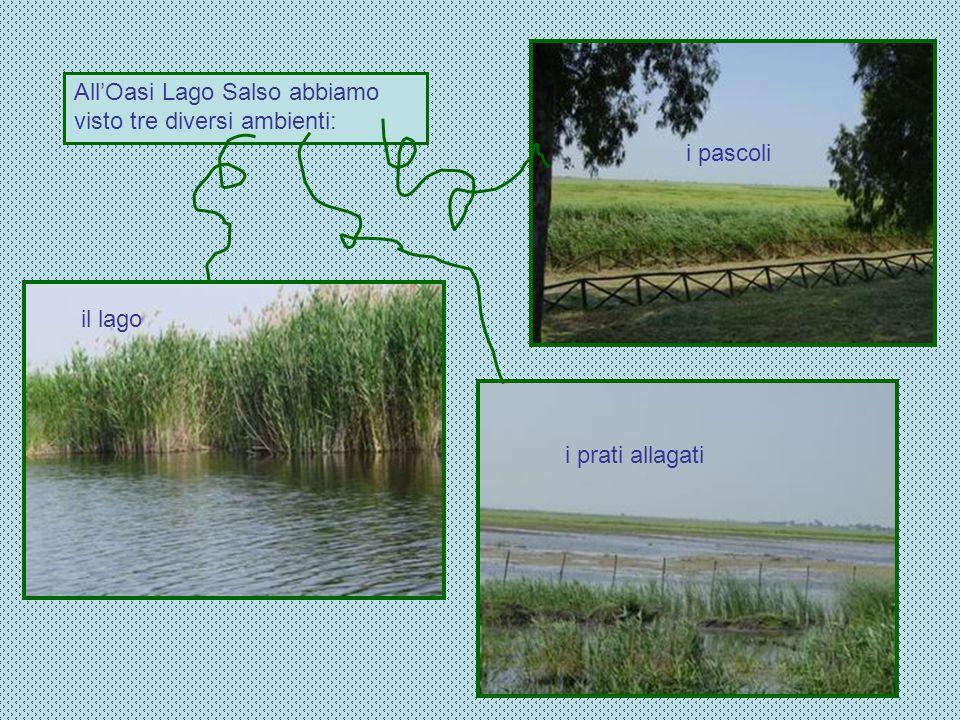 All'Oasi Lago Salso abbiamo visto tre diversi ambienti: