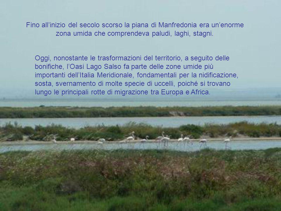 Fino all'inizio del secolo scorso la piana di Manfredonia era un'enorme zona umida che comprendeva paludi, laghi, stagni.