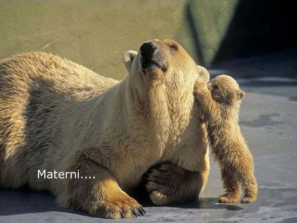 Materni....