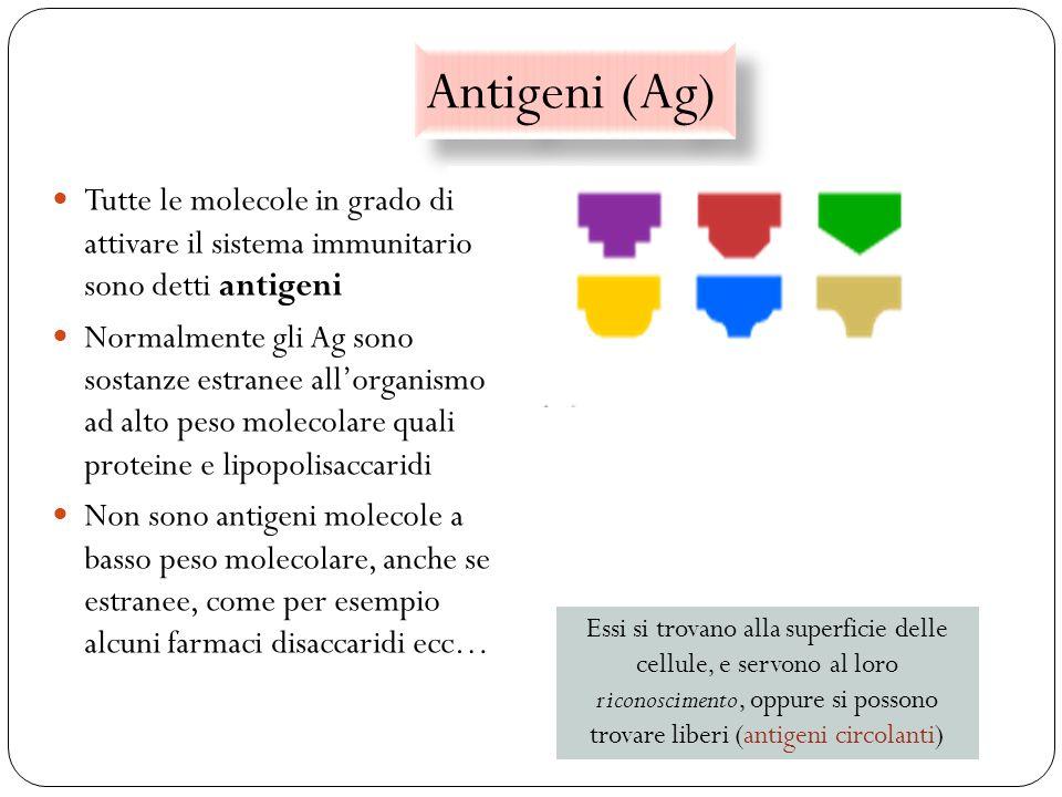 Antigeni (Ag) Tutte le molecole in grado di attivare il sistema immunitario sono detti antigeni.