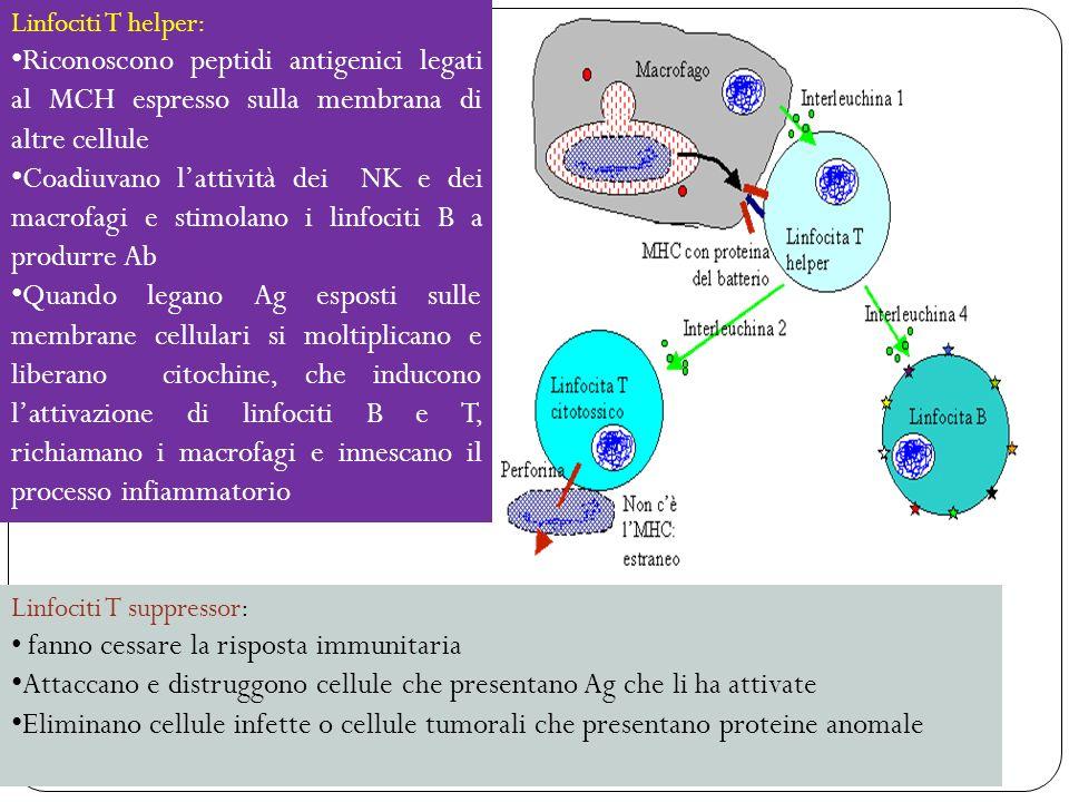 Attaccano e distruggono cellule che presentano Ag che li ha attivate