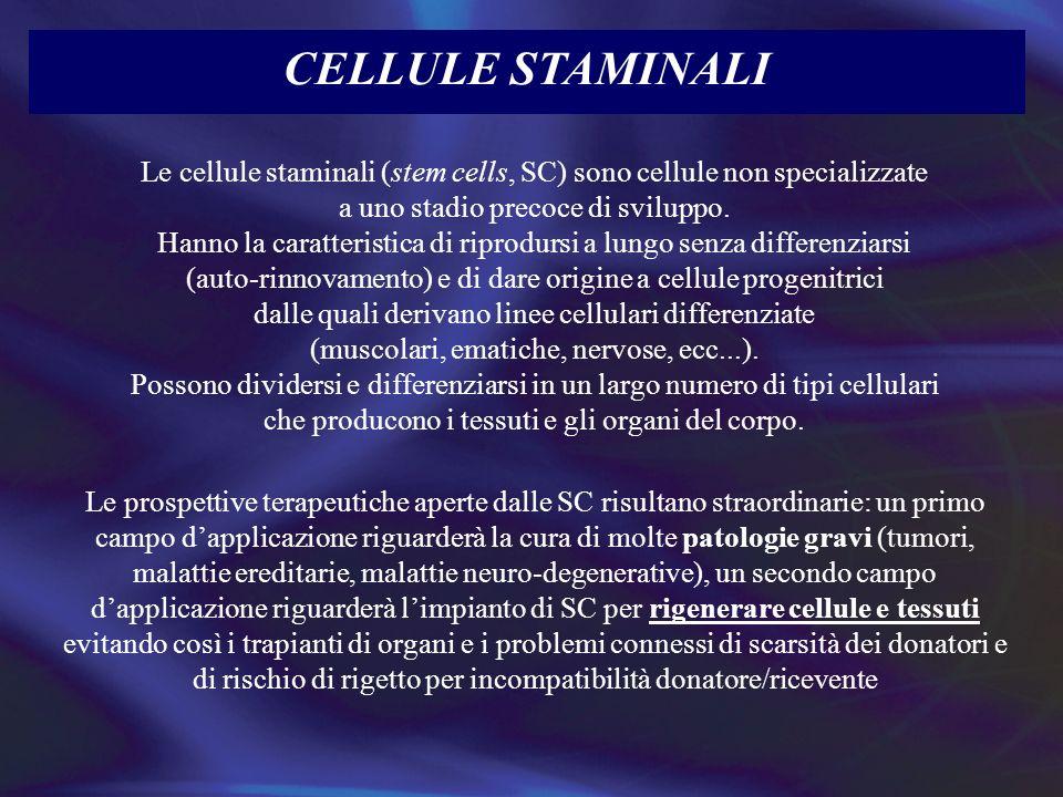 CELLULE STAMINALI Le cellule staminali (stem cells, SC) sono cellule non specializzate. a uno stadio precoce di sviluppo.