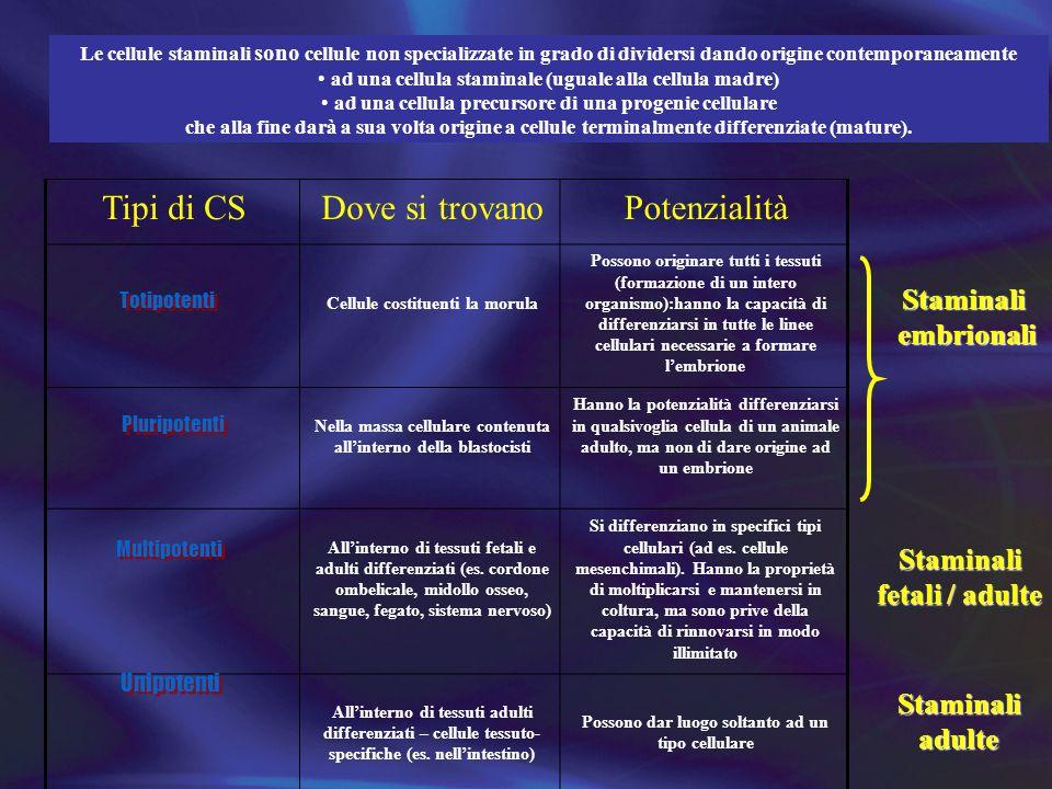 Tipi di CS Dove si trovano Potenzialità Staminali embrionali Staminali