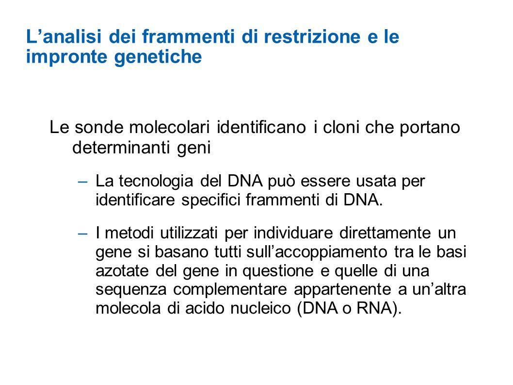 L'analisi dei frammenti di restrizione e le impronte genetiche