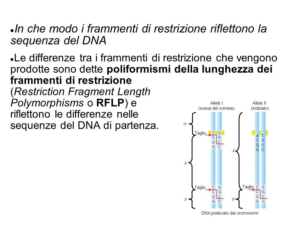 DNA prelevato dai cromosomi