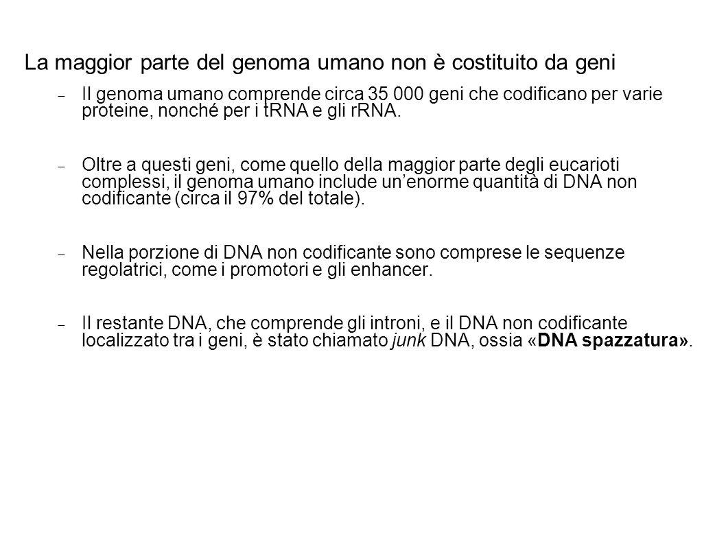 La maggior parte del genoma umano non è costituito da geni