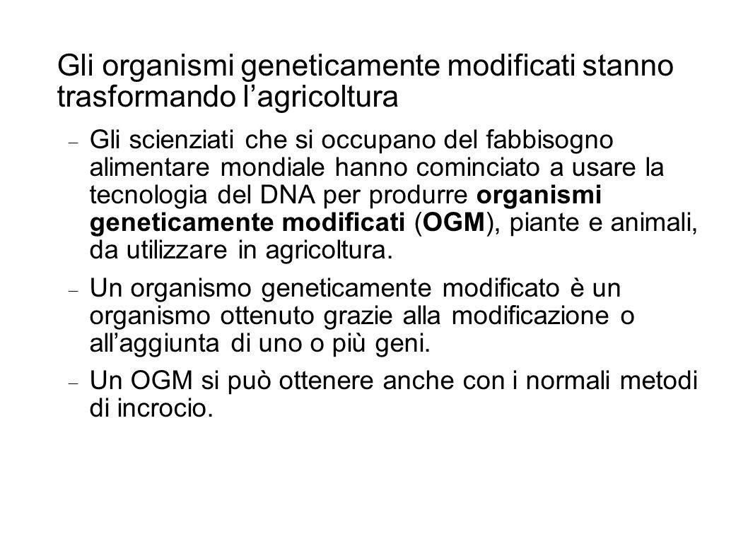 Gli organismi geneticamente modificati stanno trasformando l'agricoltura