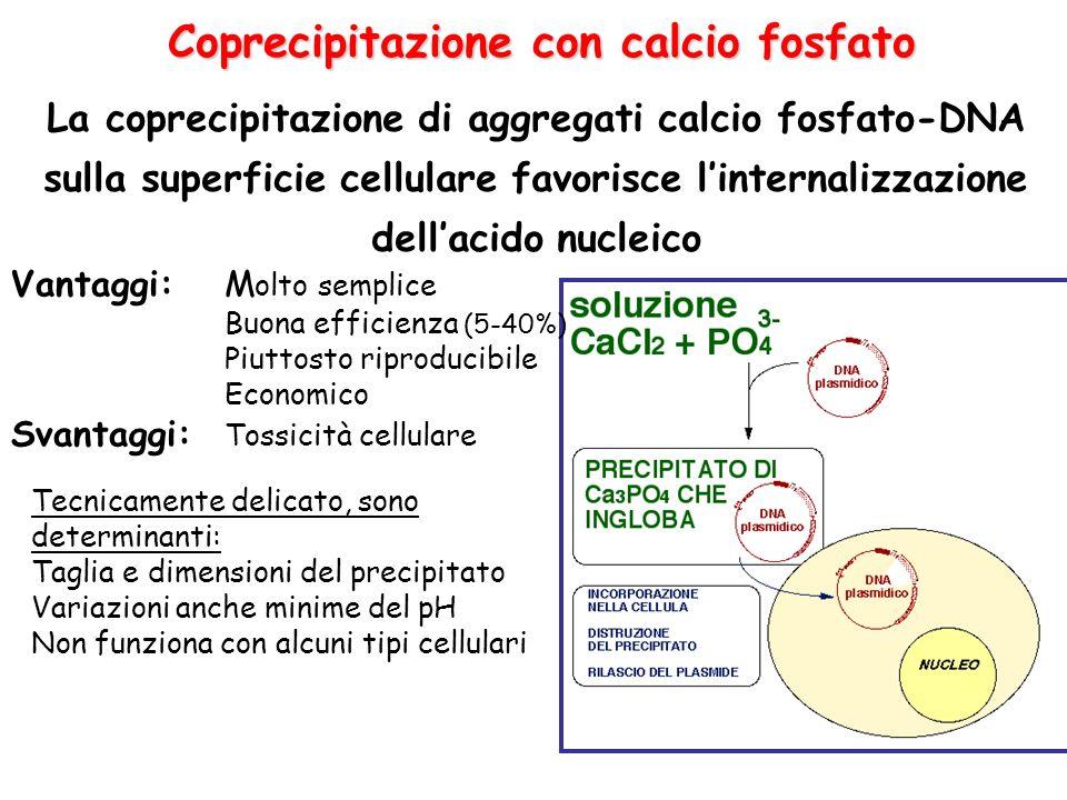 Coprecipitazione con calcio fosfato