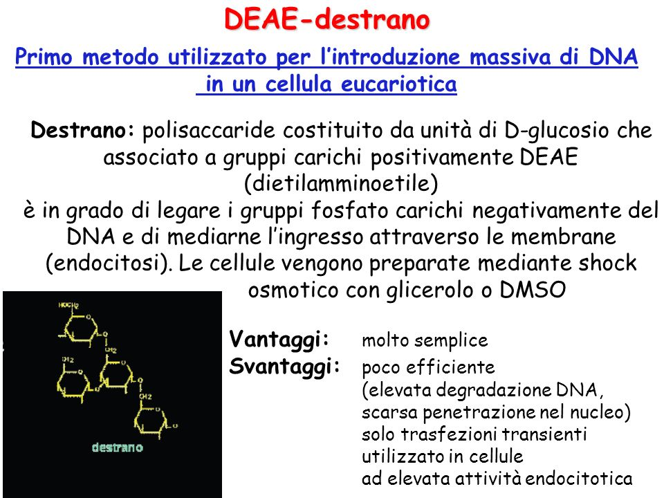 DEAE-destrano Primo metodo utilizzato per l'introduzione massiva di DNA. in un cellula eucariotica.