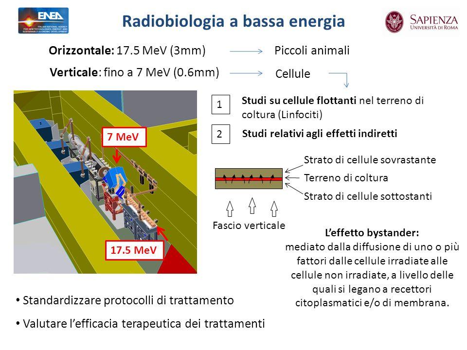 Radiobiologia a bassa energia
