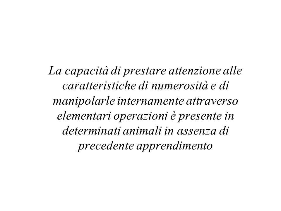 La capacità di prestare attenzione alle caratteristiche di numerosità e di manipolarle internamente attraverso elementari operazioni è presente in determinati animali in assenza di precedente apprendimento