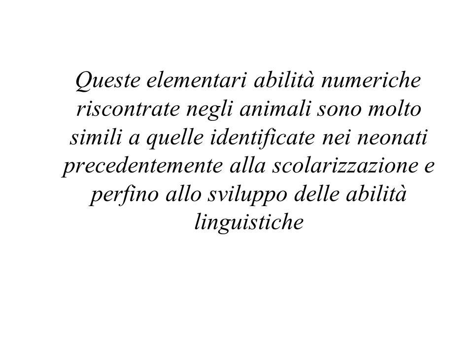 Queste elementari abilità numeriche riscontrate negli animali sono molto simili a quelle identificate nei neonati precedentemente alla scolarizzazione e perfino allo sviluppo delle abilità linguistiche