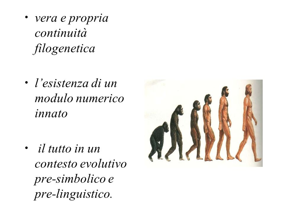 vera e propria continuità filogenetica