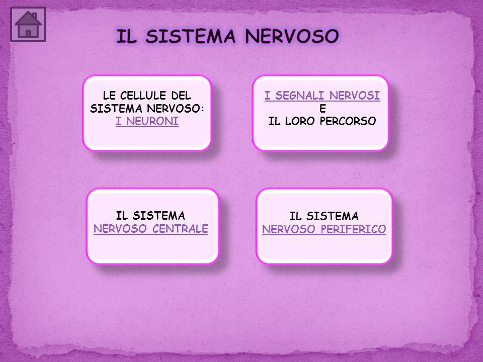 LE CELLULE DEL SISTEMA NERVOSO: I NEURONI
