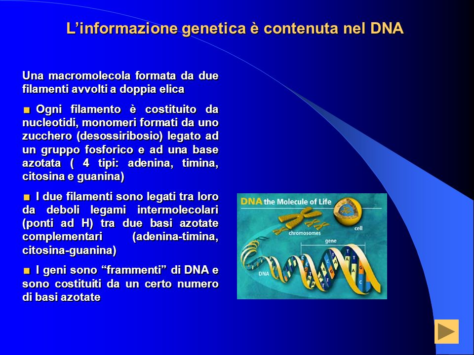 L'informazione genetica è contenuta nel DNA