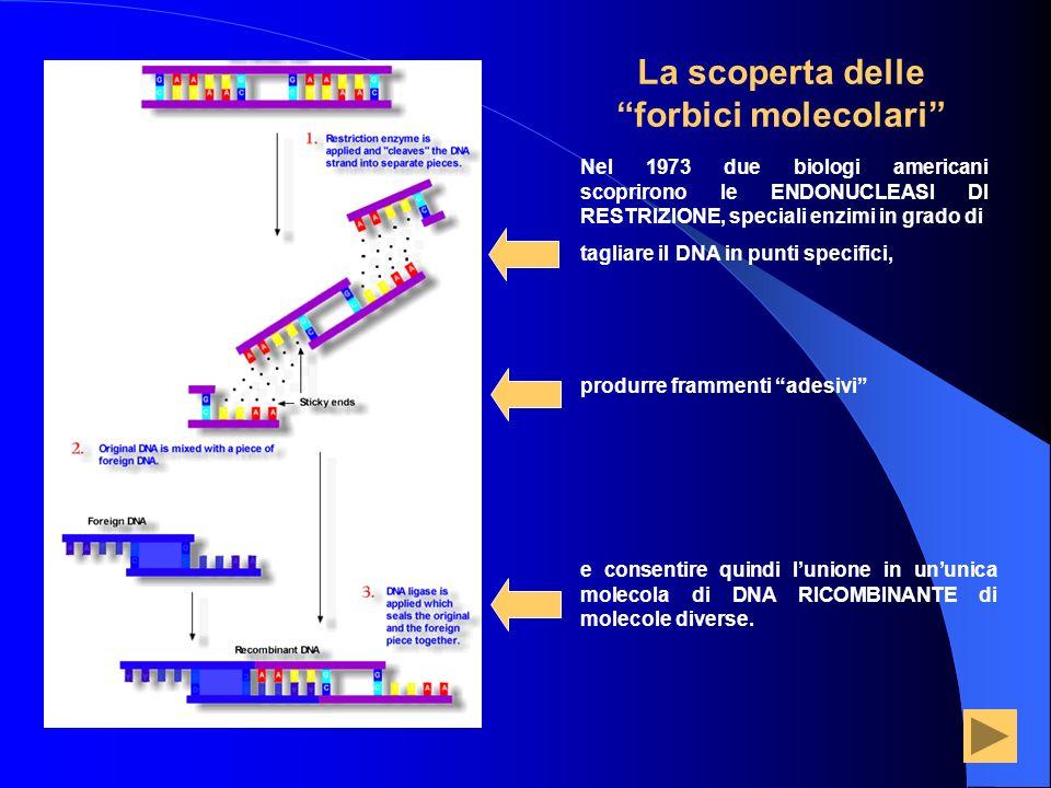 La scoperta delle forbici molecolari