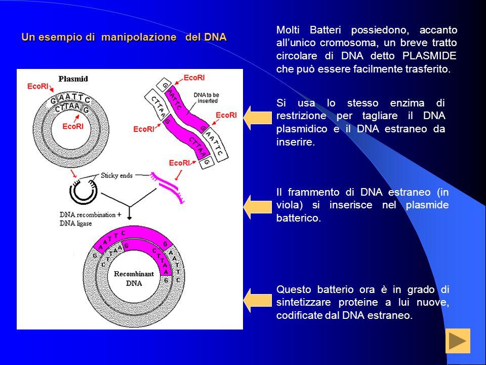 Un esempio di manipolazione del DNA