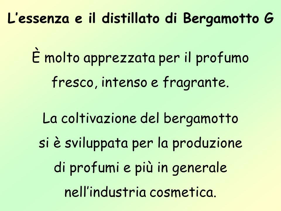 L'essenza e il distillato di Bergamotto G