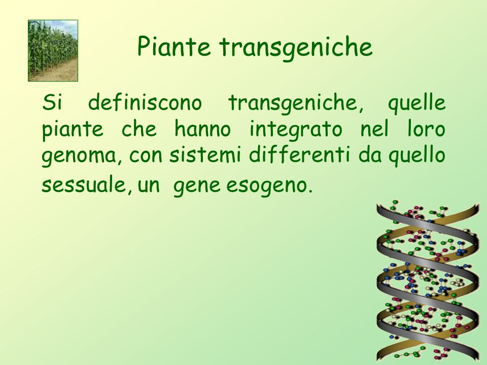 Piante transgeniche