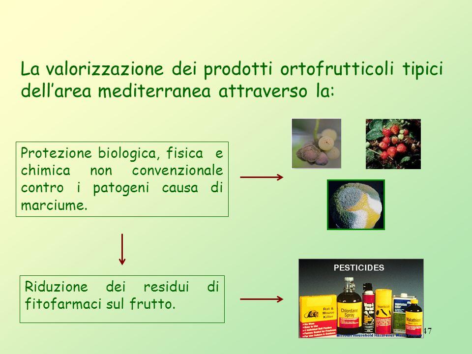 La valorizzazione dei prodotti ortofrutticoli tipici dell'area mediterranea attraverso la: