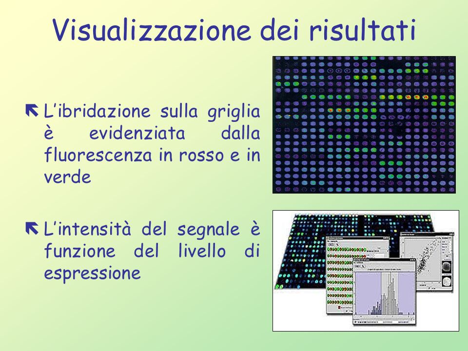 Visualizzazione dei risultati