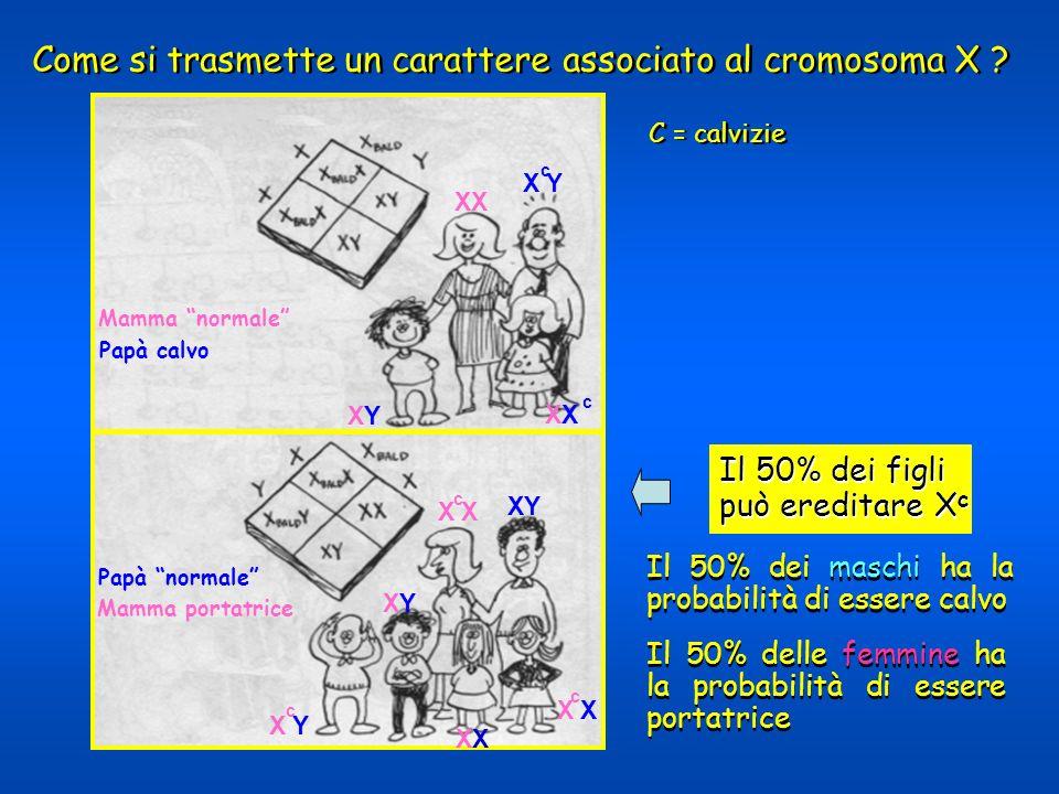 Come si trasmette un carattere associato al cromosoma X