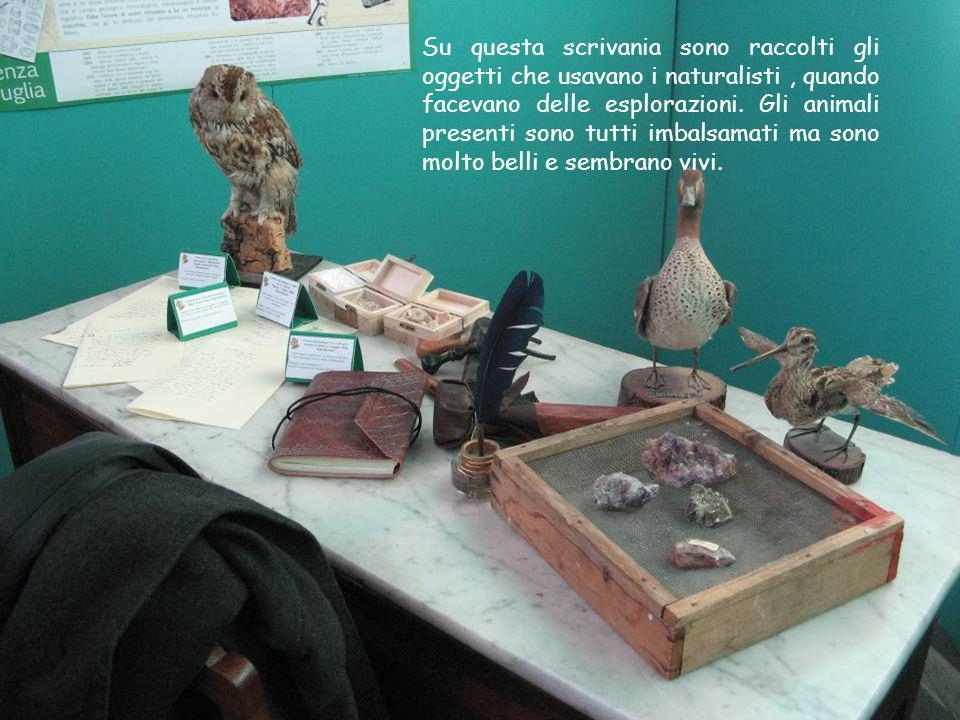 Su questa scrivania sono raccolti gli oggetti che usavano i naturalisti , quando facevano delle esplorazioni.