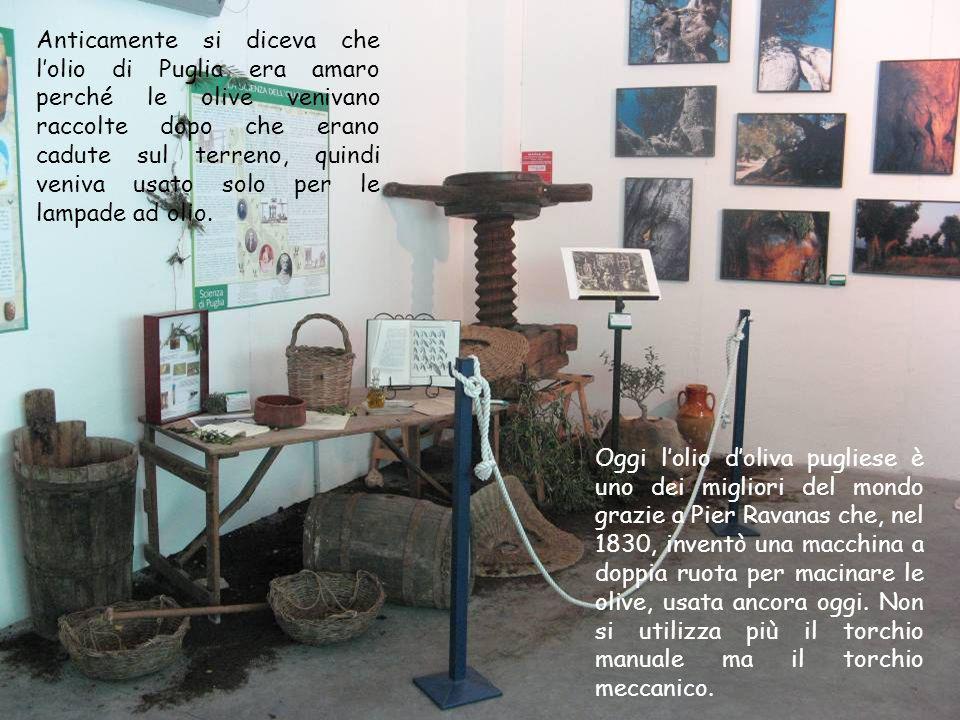 Anticamente si diceva che l'olio di Puglia era amaro perché le olive venivano raccolte dopo che erano cadute sul terreno, quindi veniva usato solo per le lampade ad olio.