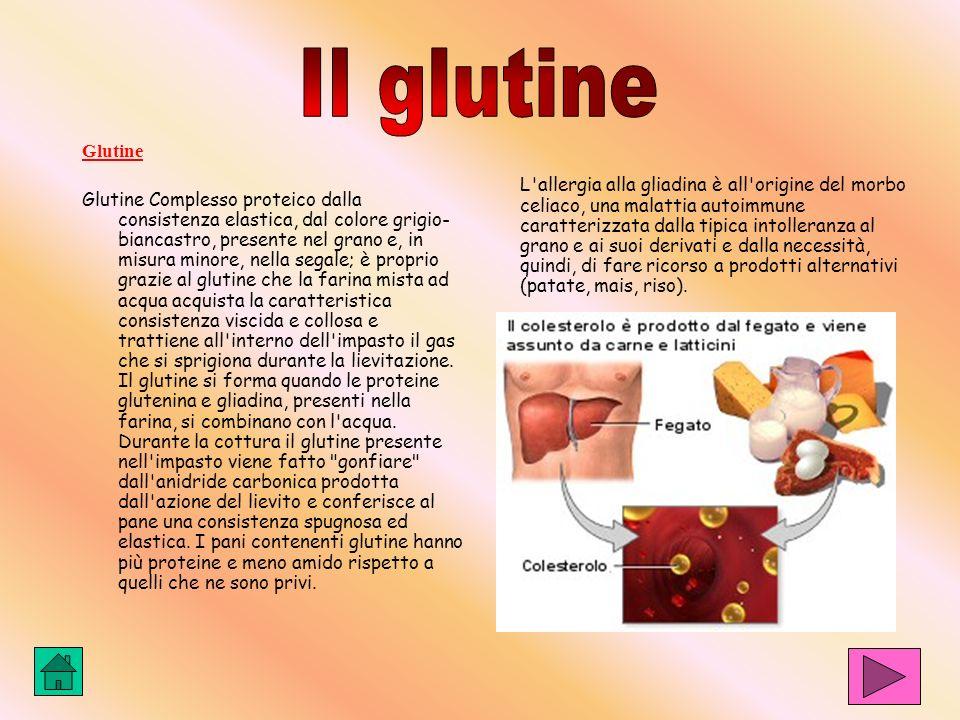 Il glutine Glutine.