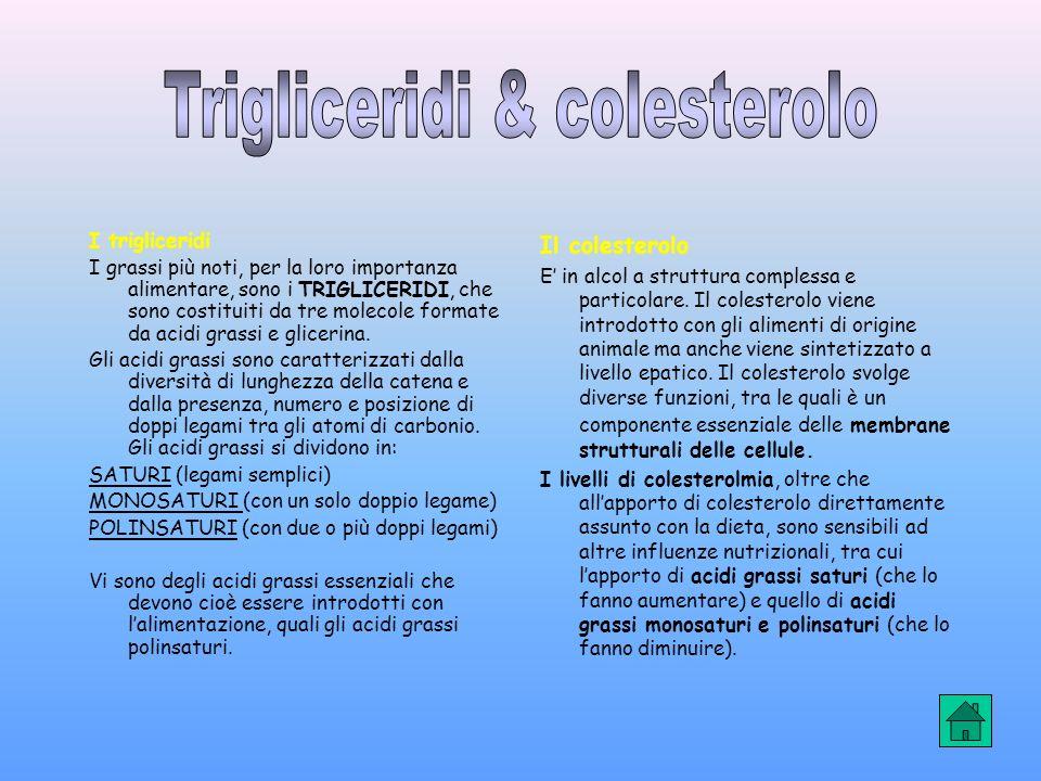 Trigliceridi & colesterolo