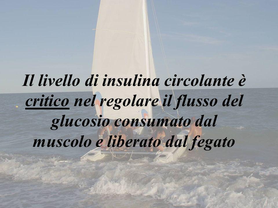 Il livello di insulina circolante è critico nel regolare il flusso del