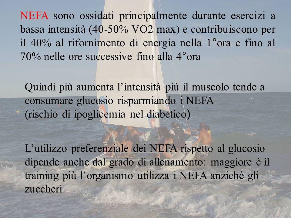 NEFA sono ossidati principalmente durante esercizi a bassa intensità (40-50% VO2 max) e contribuiscono per il 40% al rifornimento di energia nella 1°ora e fino al 70% nelle ore successive fino alla 4°ora